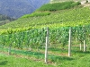 Weinreise Südtirol September 2005
