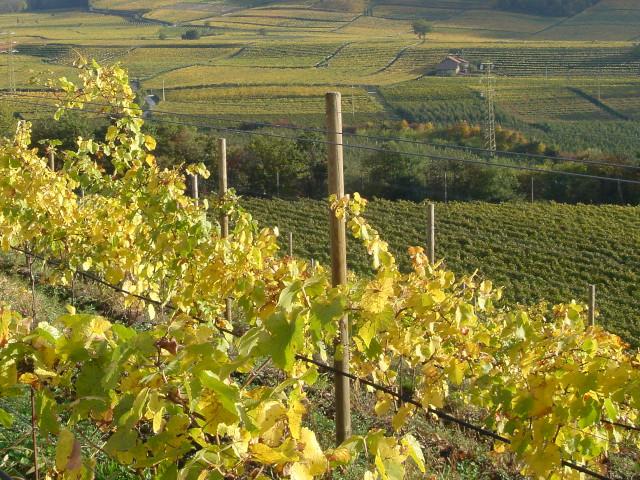 Auswertung Weinrunde bei Hannes, 1.11.2019