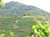 Weinreise Wien und Niederösterreich Juli 2007